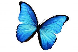 Воздушные бабочки