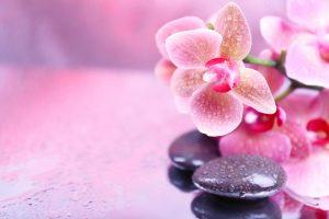 Орхидеи на воде